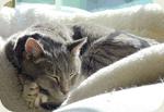 Кошка на флисе